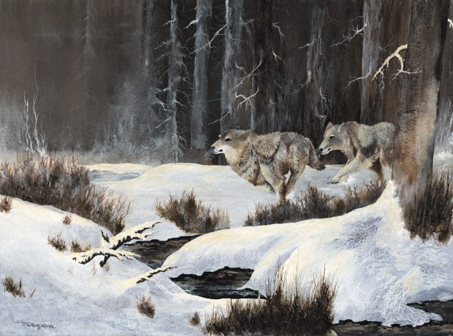 Black Timber Wolves